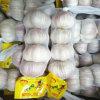 Small Packing Fresh White Garlic