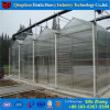Hot DIP Galvanized Steel Durable PC Greenhouse for Cucumber