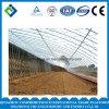 PE Greenhouse System