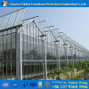 Large Size Commercial Hydroponics PC Sheet Greenhouse for Tomato