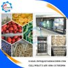 Fruit Vegetables Frozen Freezer Chiller Machine for Sale