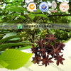 100% Pure Natural Herb Medicine Star Anise