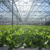 Green House for Vegtables with Cooling and Irrigation System