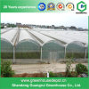 Multi-Span Tunnel PC Greenhouse for Planting