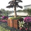 FO-9C56 Corten Steel Flower Pot for Outdoor Decoration