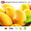 Top Quality Fresh Whole Mango