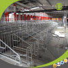 Wholesale High Economic Efficiency Wholly Hot-DIP Galvanized Pipe Pig Gestation Stall