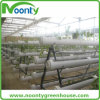 Agricultural Greenhouse System Nft Hydroponics for Lettuce