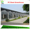 Large Solar Agricultural Greenhouse for Sale