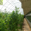 Large Size Design Commercial Film PC Greenhouse