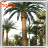 Outdoor Large Artificial Fiberglass Date Palm Tree