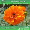 100% Natural Marigold Extract (5%~70% Lutein/Zeaxanthin)