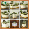 Various Ceramic Succulent Pot with Bamboo Tray