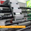 Fully automatic A type layer cage for poultry farming equipment