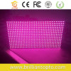 P10 Outdoor Single Color Pink Purple LED Module