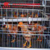 Galvanized Steel a Frame Automatic Layer Chicken Layer Cage