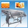 High Quality Fruit Grader for Sale Made in China