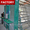 Full Automatic Eggs Collection System for Poultry Chicken Birds Breeding Layer Rearing Farming
