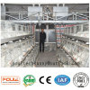 Broiler Chicken Cage Chicken Farm Equipment for Philippine Poultry