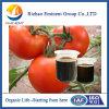 15% Amino Acid organic Fertilizer