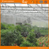 Dutch Technology Venlo Type Greenhouse Covered by Glass
