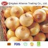 2017 Fresh Yellow Onion in Cartons