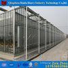 Commercial Hydroponic Systems Glass Greenhouse for Tomato
