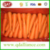 2017 New Crop Fresh Carrot