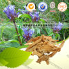 High Quality Herbal Medicine Gentiana Macrophylla