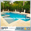 Honed Beige Natural Limestone Tile for Indoor Swimming Pool Coping/Pool Paving