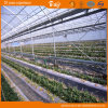 High Light Transmittance Plastic Film Greenhouse
