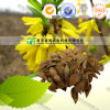 100% Pure Natural Herb Medicine Fructus Forsythiae