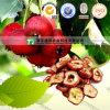 Maslinic Acid Hawthorn Leaf Extract