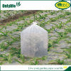 Onlylife Hot Sales PE Garden Plant Cover for Tomato
