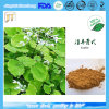 100% Natural Food Additive Epimedium/Horny Goat Weed Extract