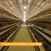 Tianrui Design Poultry House Equipment A Type Battery Chicken Cage System