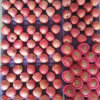 Top Quality of Fresh Blush Red Qinguan Apple