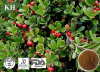 Bearberry Leaf Extract Arbutin 99%