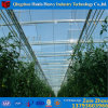 Low Cost Clearly Multi-Span Light Deprivation Greenhouse for Tulip