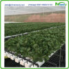 Nft Hydroponics System for Lettuce, Cabbage, Herbs, etc