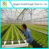 Hot Sale Hydroponic System for Vegetables