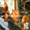 Automatic Rotating Electric Barbeque Machine