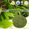 Pure Natural Herb Medicine Herba Loophatheri Dan Zhu Ye