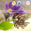 Manufacturer Supply Crude Medicine Chinese Pulsatilla Root