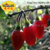 Medlar Lbp EU and Nop Certificates Goji