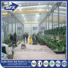 Broiler Chicken House for Export Algeria Poultry Farm