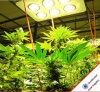 China Manufacturer 756W COB T8 LED Tube Plant