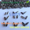 Professional Produce Top Quality Sunflower Seeds 5009 to Clients