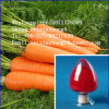 High Quality Carrot Extract Beta-Carotene 20%