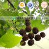 Natural Herbal Medicine Raw Material Fructus Liquidambaris